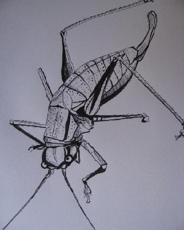 insectedessinblog008.jpg