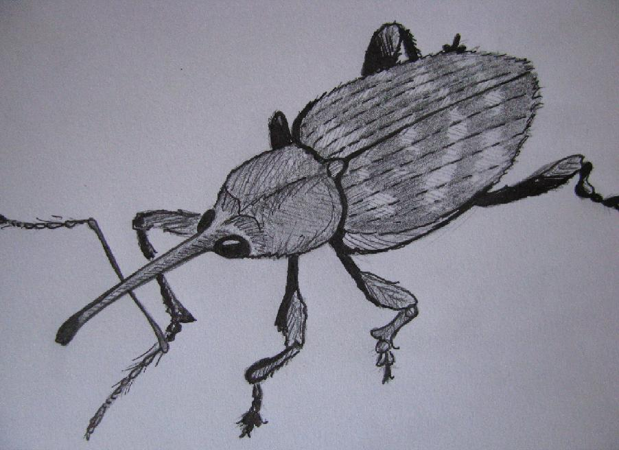 insectedessinblogcharancon002.jpg